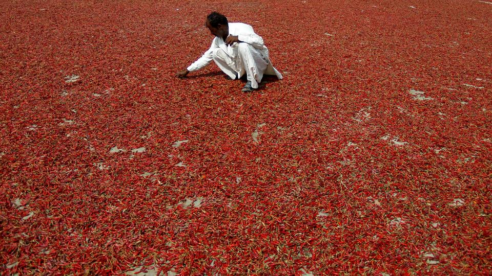 chili in pakistan