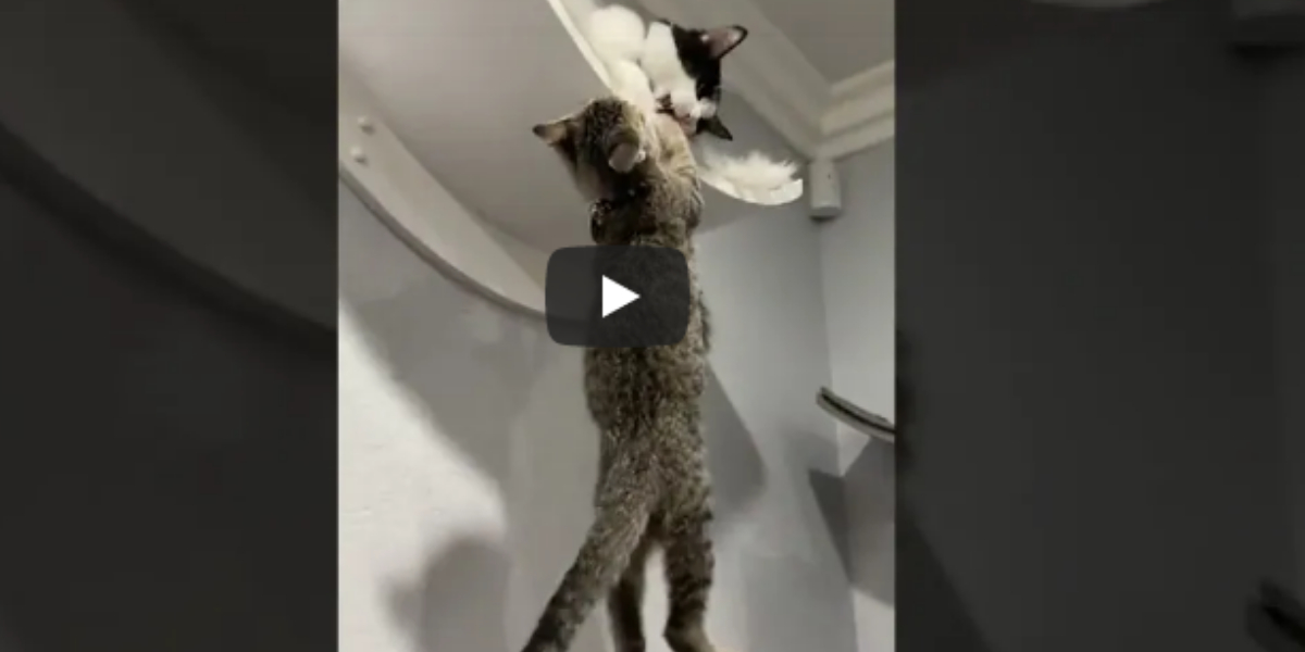 Amazing video of cats
