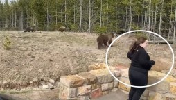 Yellowstone tourist charged after getting too close to a bear