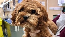 Florida woman's misplaced puppy reappears on Facebook