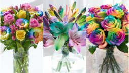 rainbow roses with vividly colored petals