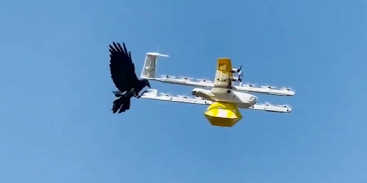 Raven took offense to drones flying into its territory