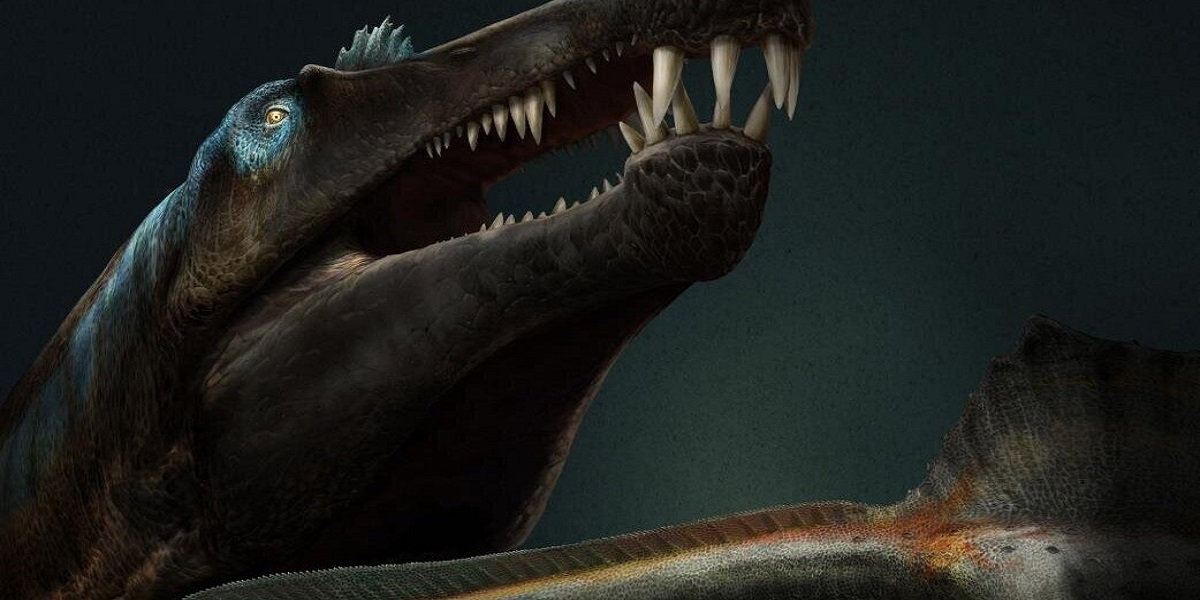 Researchers discovered the Shark-toothed dinosaur