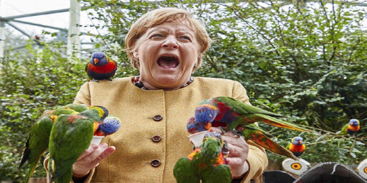 Angela Markel pecked by a dozen of parrots in bird park