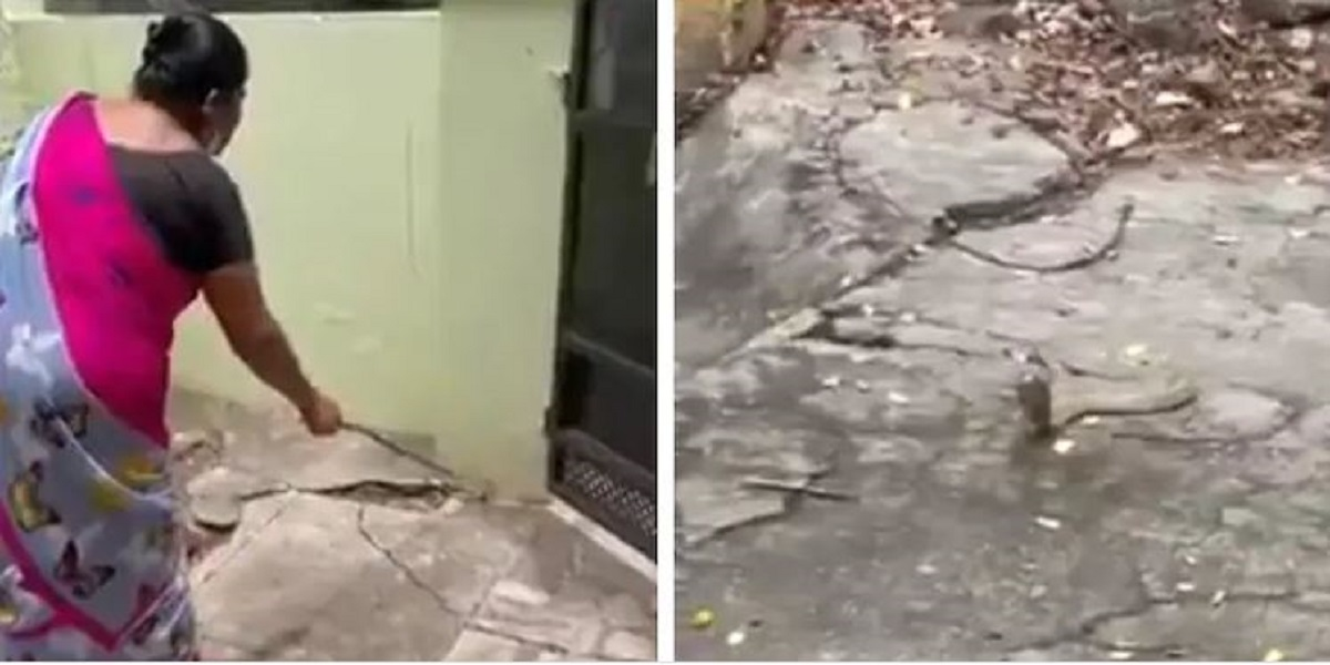 Woman encounters a snake in her house, see what she did