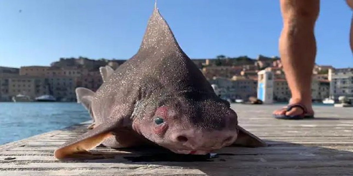 Sailors Puzzled by a 'Pig-Faced' Shark Caught in Italy Going Viral
