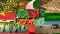 Large-scale farming to bring agricultural progress in Pakistan: Chinese scholar