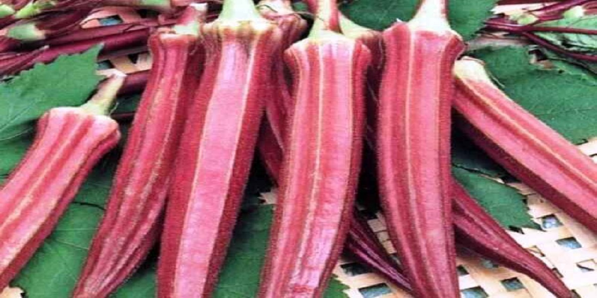 India: Red lady finger that costs Rs 800 per kg, here's why?