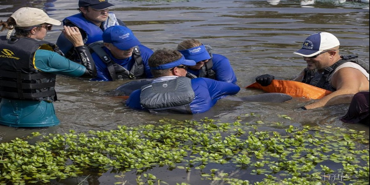 Hurricane Ida: Stranded dolphin rescued and returned to the wild