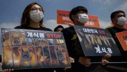 South Korea's President Moon raises dog meat ban