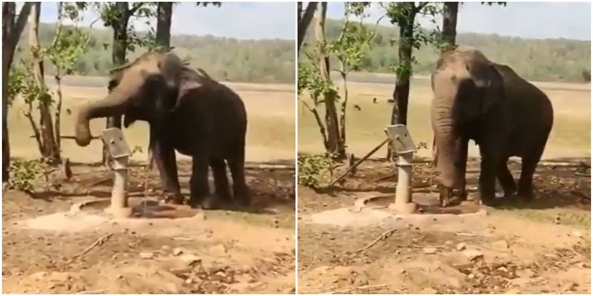 India: Elephant drawing water from tube-well wins hearts on Twitter