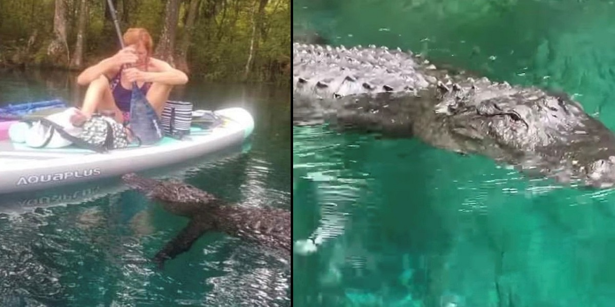Florida: Alligator attempts to bite woman's paddleboard