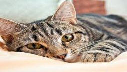 Stranded lost cat reunited with their owners after 10 years