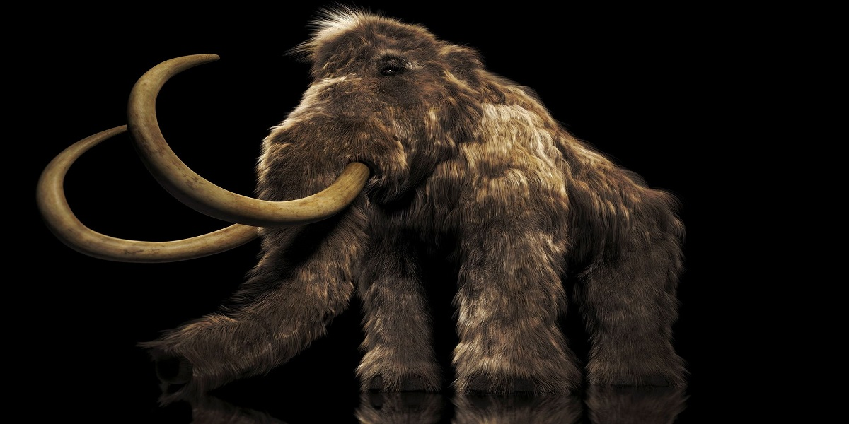 Bioscience Company just raised $15 Million for reviving Woolly Mammoths