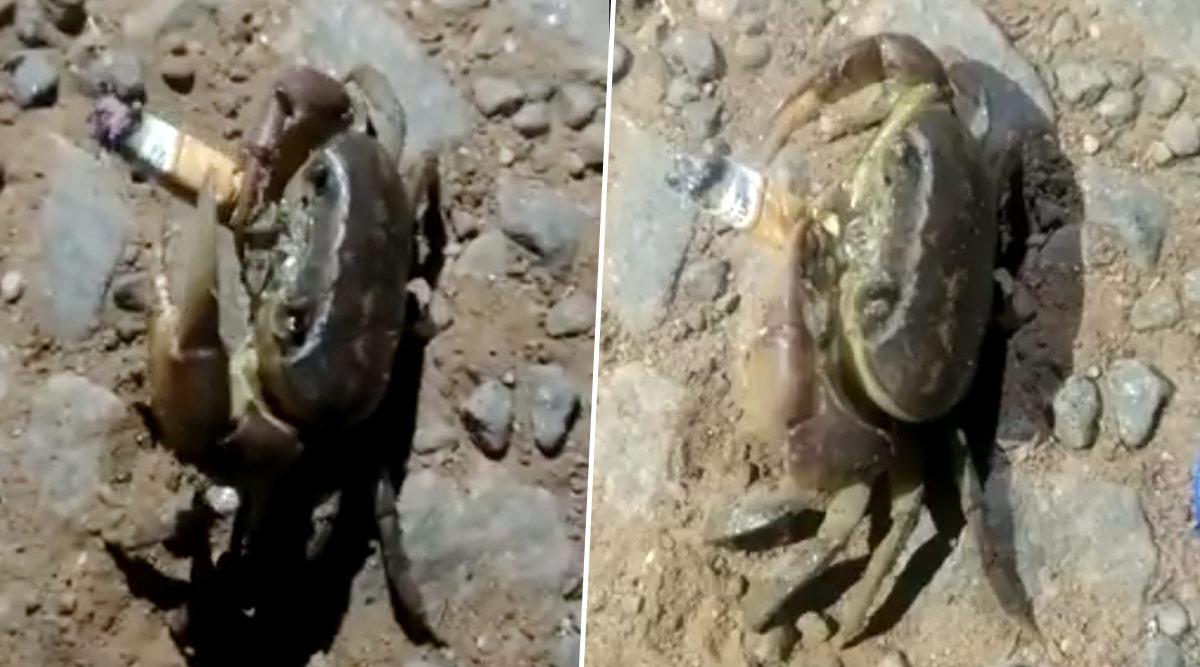 Crab Smokes Cigarette video goes viral on social media