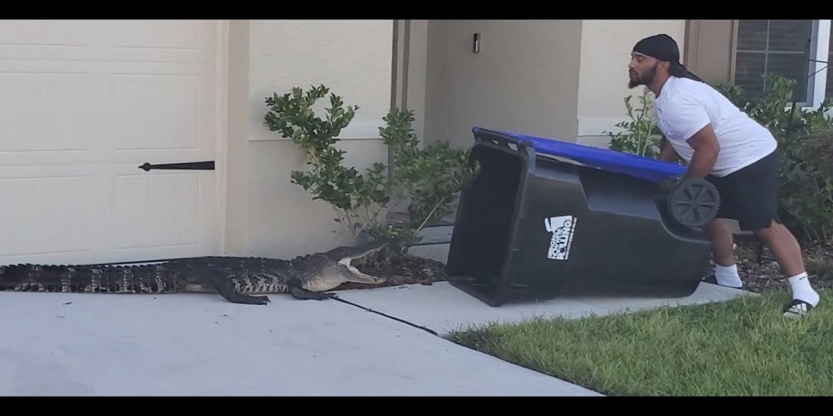 Watch: Man uses a trash bin to catch a straying reptile