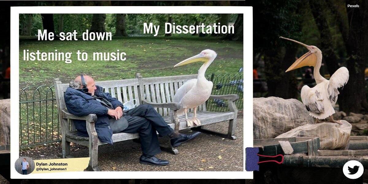 Elderly guy sitting near a massive pelican in a park gone viral