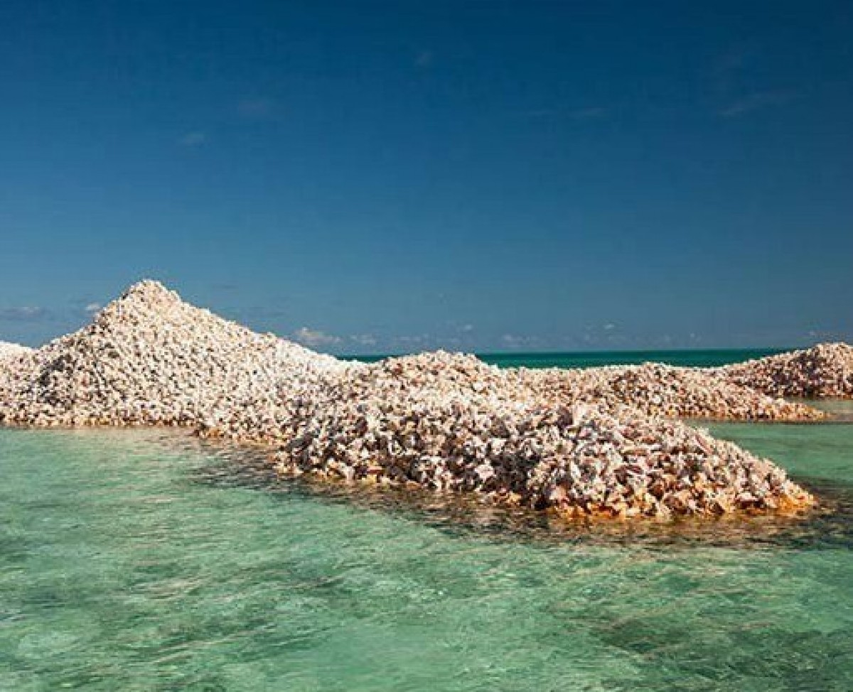 A small island in Corsica made from oyster shells