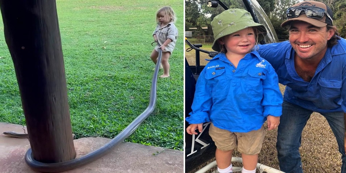 Watch: Toddler of a wildlife expert handles giant snake, the video gets viral